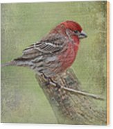 Spring Finch Wood Print