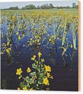 Spring Flood Plains With Wildflowers Wood Print