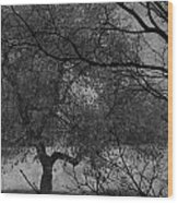 Spring For Leaves  Wood Print