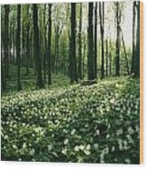 Spring Forest View With Anemones, Rugen Wood Print by Sisse Brimberg