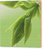 Spring Green Leaves Wood Print by Elena Elisseeva