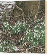 Spring In The Air Wood Print