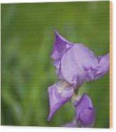 Spring Is Blooming  Wood Print