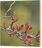 Spring Leaves Greeting Card Blank Wood Print