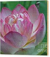 Spring Lotus-08 Wood Print