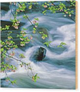 Spring Middle Prong Little River Wood Print