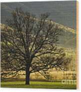 Spring Morning In Cades Cove - D003803a Wood Print
