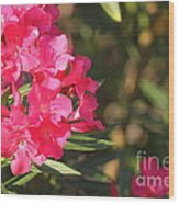 Spring On Oleander Wood Print