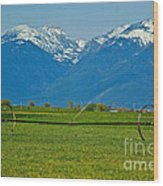 Spring On The Missions Wood Print