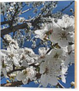 Spring Pear Blossoms 2012 Wood Print by Joyce Dickens