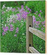 Spring Phlox 6074 Wood Print