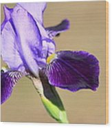 Spring Purple Wood Print