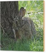 Spring Rabbit Wood Print