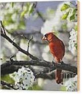 Spring Bradford Pear Blossoms Wood Print