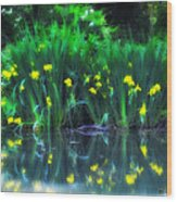 Spring Reflections Wood Print
