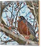 Spring Robin Wood Print
