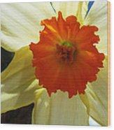 Spring Shines Brightly Wood Print