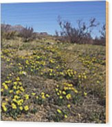 Spring Surprise Franklin Mountains Wood Print