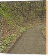 Spring Trail Scene 4 Wood Print