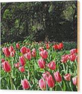 Spring Tulips 1 Vertical Wood Print