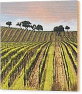 Spring Vineyard Wood Print