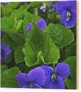 Spring Violets Wood Print by Yvonne Scott