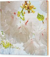 Spring White Pink Tree Flower Blossoms Wood Print