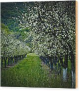 Springtime In The Orchard II Wood Print