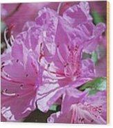 Springtime Pinks Wood Print
