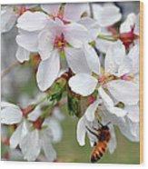 Springtime Weeping Cherry Tree Wood Print