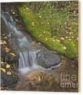 Sprinkle Of Autumn Wood Print