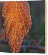 Sprinkled Frost Wood Print