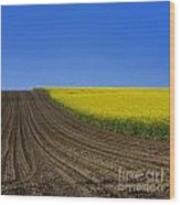 Sprouting Field Of Sunflowers And Field Of Rape. Auvergne. France. Europe Wood Print