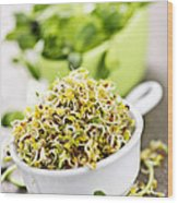 Sprouts In Cups Wood Print by Elena Elisseeva