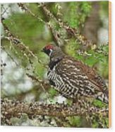 Spruce Grouse Wood Print