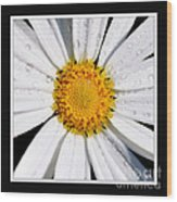 Square Daisy - Close Up 2 Wood Print