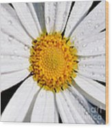 Square Daisy - Close Up Wood Print