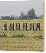 Square Hay Bales Wood Print