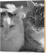 Squeaker And Austin Wood Print