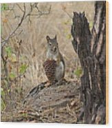 Squirrel And Cone Wood Print