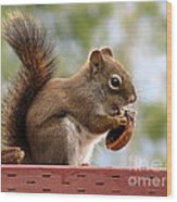 Squirrel And His Walnut Wood Print
