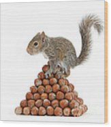 Squirrel And Nut Pyramid Wood Print