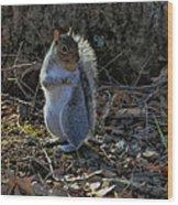 Squirrel At Base Of Tree - C2074b Wood Print