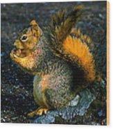Squirrel At Riverfront Park Wood Print