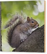 Squirrel Before Green Leaves Wood Print
