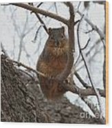 Squirrel Eating In The Frost Wood Print