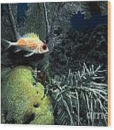 Squirrel Fish Wood Print