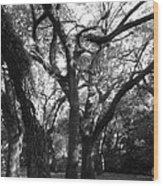 Squirrel Grove Wood Print
