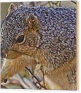 Squirrel Having A Heart Attack Wood Print