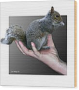 Squirrel In Hand Wood Print